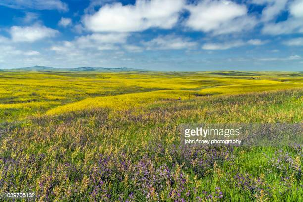 the stunning grass lands of north dakota. usa - great plains stock pictures, royalty-free photos & images