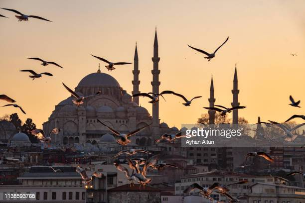 the suleymaniye mosque and seagulls at sunset in istanbul, turkey - istambul imagens e fotografias de stock