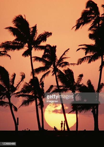 The Sun and Palm Tree