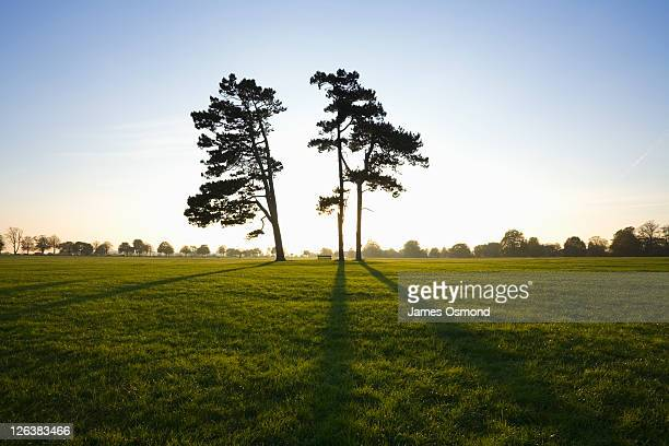the sun casting shadows of two pine trees on durdham down, bristol. - bristol stock pictures, royalty-free photos & images