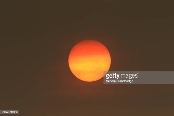 the sun colour in the uk was due to a weather phenomenon, saharan dust, blown in by ex-hurricane ophelia and also from debris, caused by fires in portugal and spain. - suns stock photos and pictures