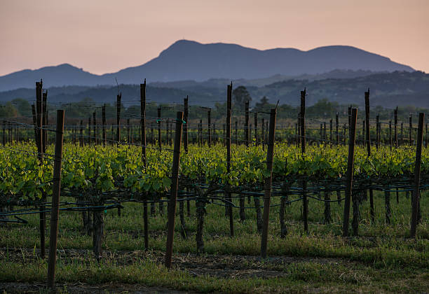Spring Arrives Early in California Wine Country