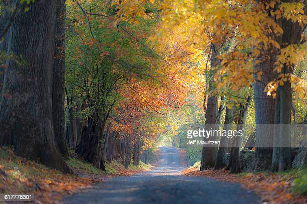 The sun filters through trees along a Northern Virginia backcountry gravel road in autumn.
