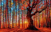 The sun goes down behind the autumn forest