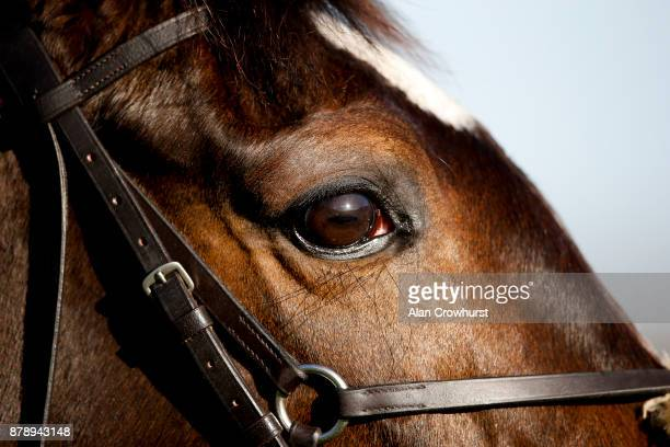 The sun is reflected in a horses eye at Ascot racecourse on November 25 2017 in Ascot United Kingdom