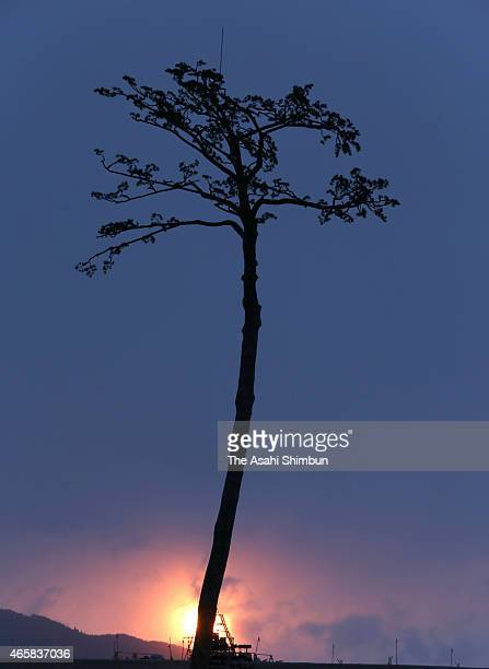 The sun rises behind the socalled 'Miracle Pine Tree' on the fourth anniversary of the Great East Japan Earthquake on March 11 2015 in Rikuzentakata...