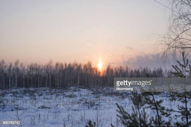 The sun rises beyond a birch tree forest in Chernobly Ukraine on Wednesday Feb 28 2018 Solar Chernobyl SPP a partnership between Rodina Energy Group...
