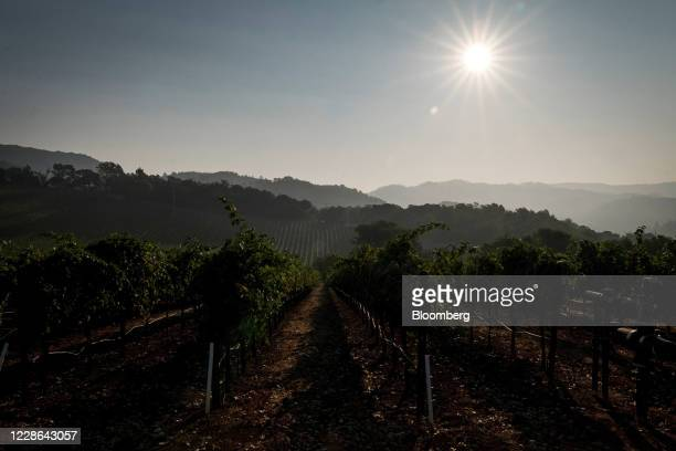 The sun rises over hill at a vineyard in Kenwood California US on Monday Sept 21 2020 Smoke from the LNU Lightning Complex wildfires may have damaged...