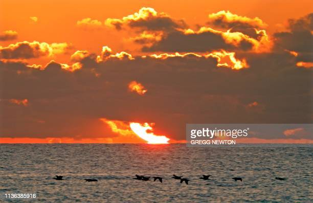 The sun rises over the Atlantic Ocean beyond a flock of Pelicans near Playalinda Beach near the Kennedy Space Center in Florida on April 11 2019