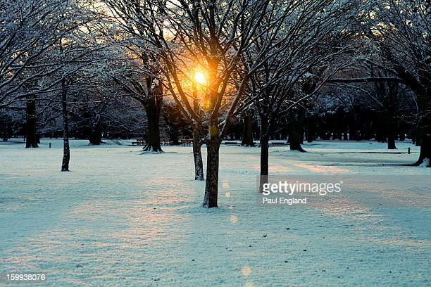 The sun rises through the trees in Yoyogi Park one snowy morning. Sunrise Snow Lens Flare