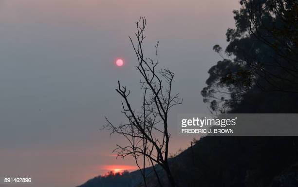 The sun sets behind fire ravaged trees in Toro Canyon California north of Santa Barbara on December 12 2017 Crews battling wildfires ravaging...