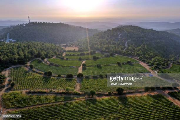 The sun sets over the Mediterranean shortly before the start of a night harvest of Chardonnay grapes for Tzora Vineyards winery on August 2, 2021 in...