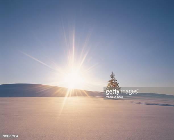 The Sun Setting Over a Single Tree in a Snowy Field. Biei, Hokkaido, Japan