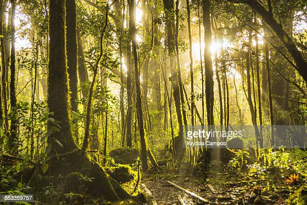 The sun shines through the dense forest