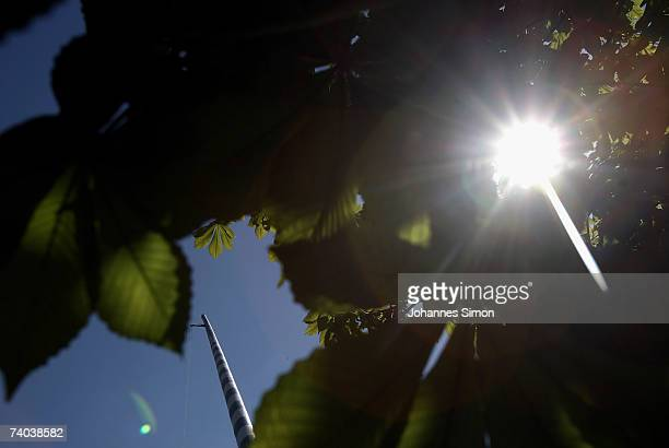 The sun shines through the leaves of a chestnut tree during the erection of a 28 metres long maypole on May 1 2007 in Elbach near Miesbach Germany...