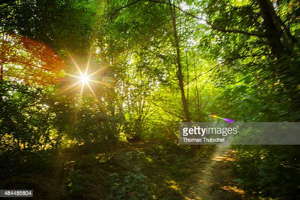 The sun shines through the leaves of a small forest on August 07 2015 in Klipphausen Germany