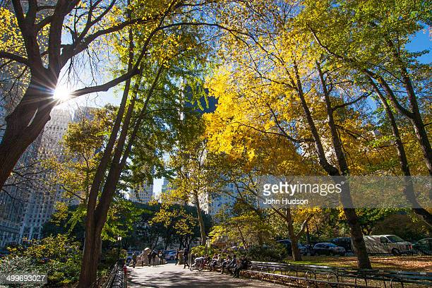 The sun shines through the trees in Central Park in the fall.