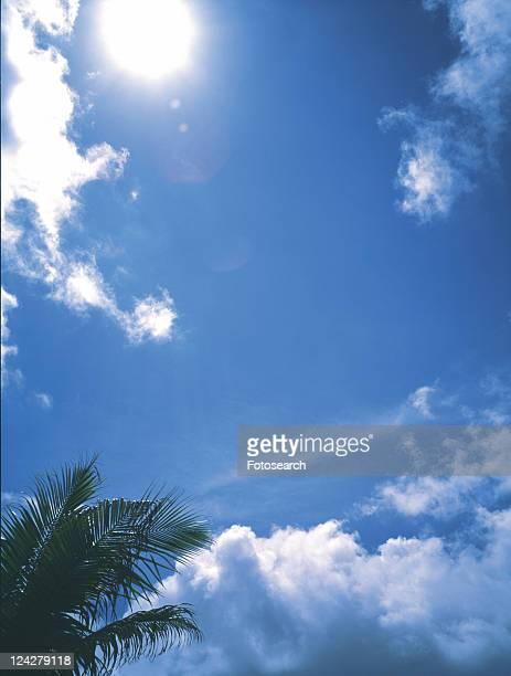 the Sun Shining Over a Blue Sky and a Palm Tree, Lens Flare, Low Angle View