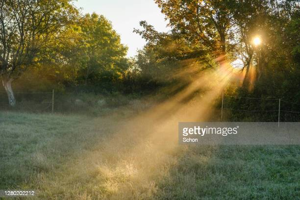 the sun shining through trees and morning mist in autumn in agricultural landscape - sunbeam stock pictures, royalty-free photos & images