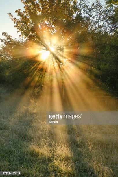 the sun shining through trees and morning mist in autumn in agricultural landscape - electric light stock pictures, royalty-free photos & images