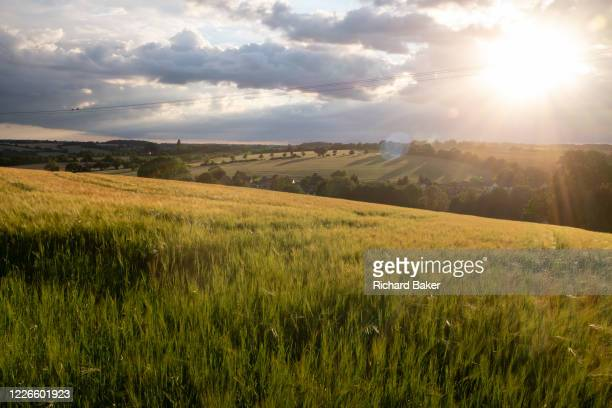 The sun sinks over barley fields and the valley outside Hartest, valley on 10th July 2020, in Hartest, Suffolk, England. On 10th July 2020, in...