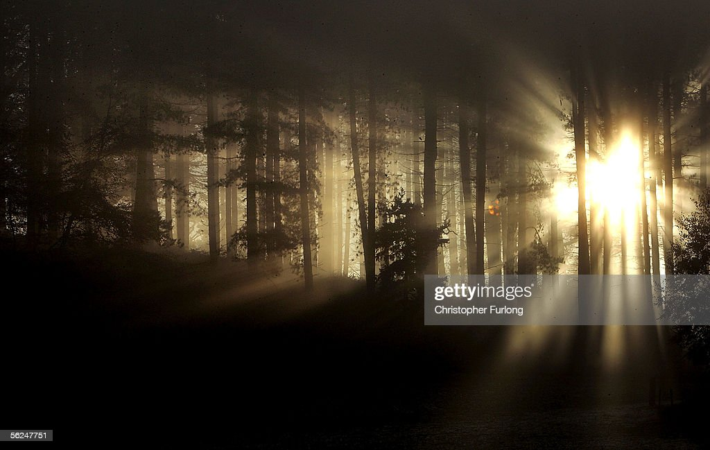 Fog Shrouds Rural England As Cold Snap Continues : News Photo