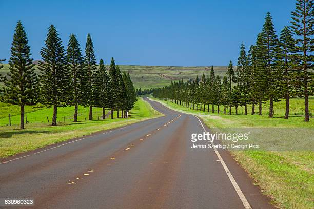 the sunny tree-lined manele road, highway 440 - lanai stock photos and pictures