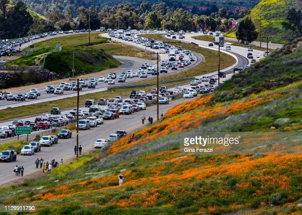 The super bloom creates a traffic jam along the 15 freeway as wildflower enthusiasts wait to exit towards Walker Canyon on March 9, 2019 in Lake...
