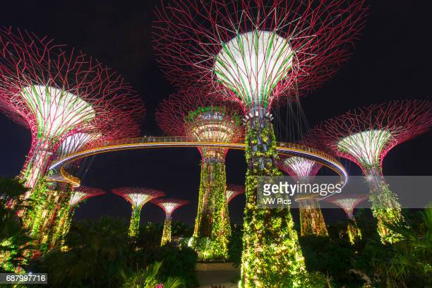 The Supertree Grove Gardens by the Bay Singapore Asia