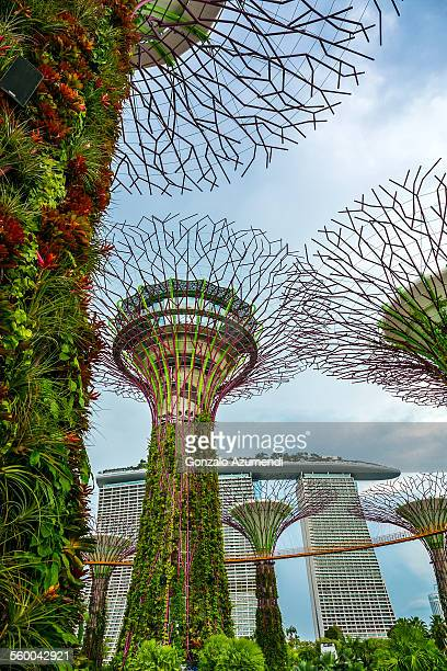 The Supertree Grove in Singapore