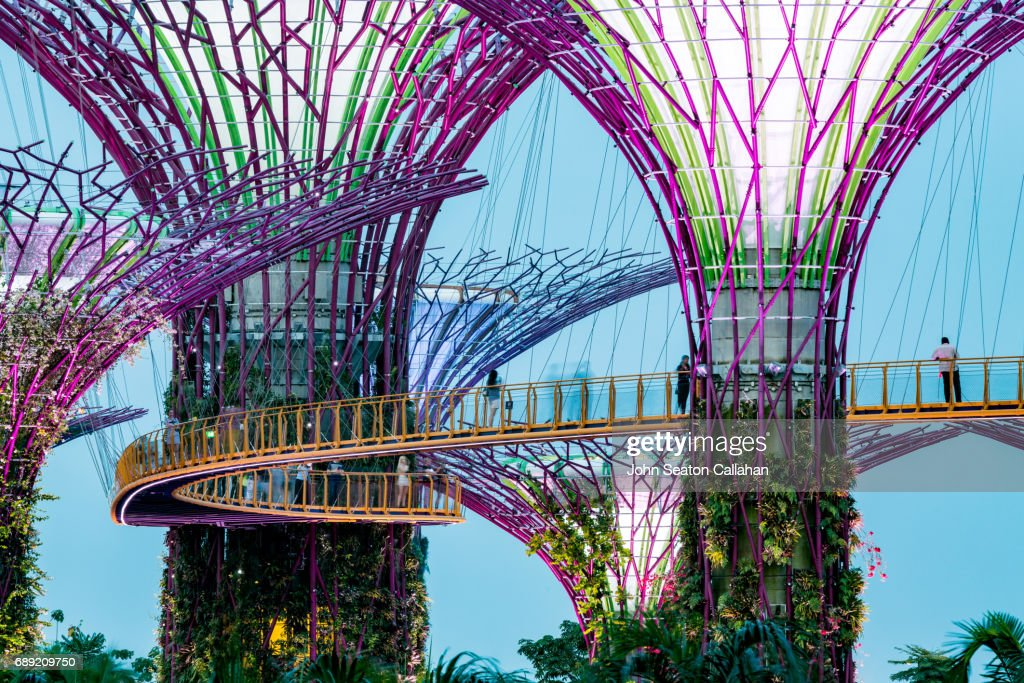 The Supertrees at Gardens by the Bay : Stock Photo