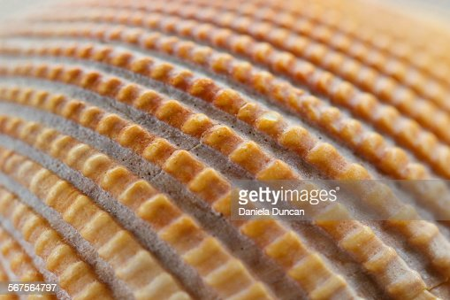 The surface of a seashell