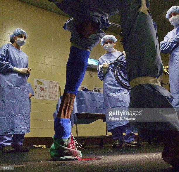 The surgical team at the Tufts University School of Veterinary Medicine Hospital for Large Animals prepares for a surgical procedure January 11 2002...