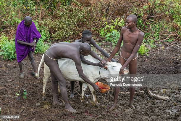 CONTENT] The Surma are a sedentary pastoral people who inhabit the Bench Maji Zone of the Southern Nations Nationalities and People's Region in...