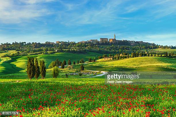 The surroundings of Pienza with poppy field in Val d'Orcia, Tuscany, Italy