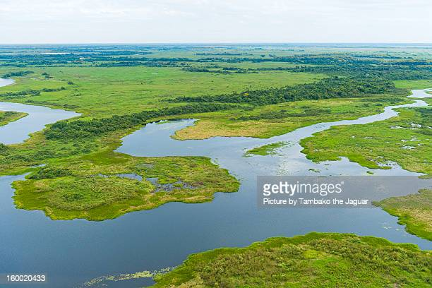 The swamps of the pantanal