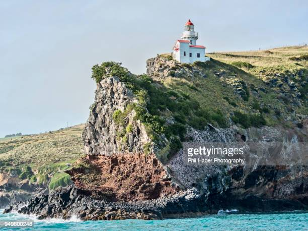 the taiaroa head, otago peninsula, new zealand - otago region stock pictures, royalty-free photos & images