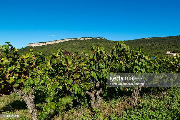 the taillade crest, les embruscalles, claret, herault, languedoc roussillon, france - herault stock pictures, royalty-free photos & images
