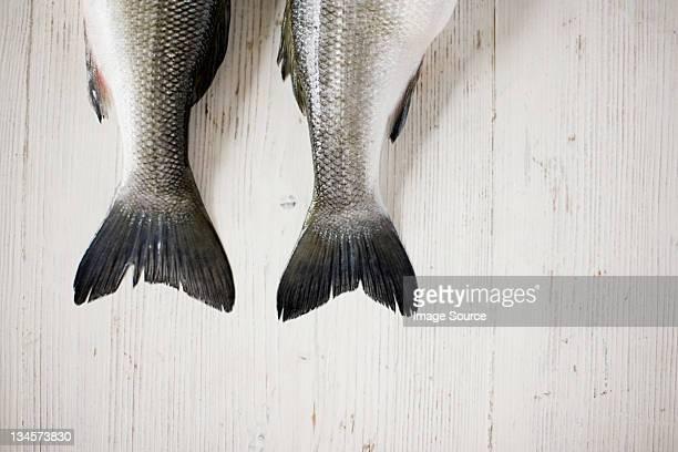 Los extremos de dos pescado de lado a lado
