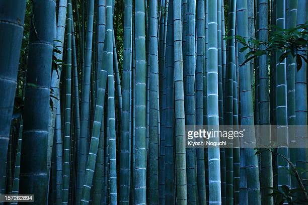 the tale of the bamboo-cutter - 竹 ストックフォトと画像
