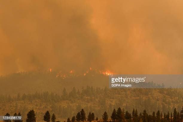 The Tamarack fire burns unchecked due to drought conditions and gusty winds. The Tamarack fire continues to burn through more than 21,000 acres and...