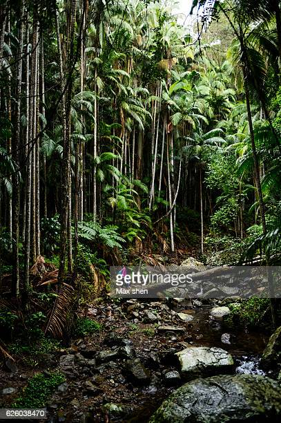 The Tamborine Rainforest in Queensland, Australia.