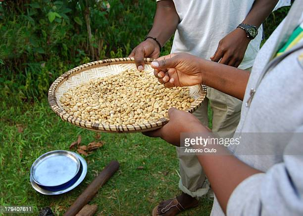 The Tanzania Coffee Board, the regulator of the industry of coffee, estimates that production will increase over coming years. It is a possible...