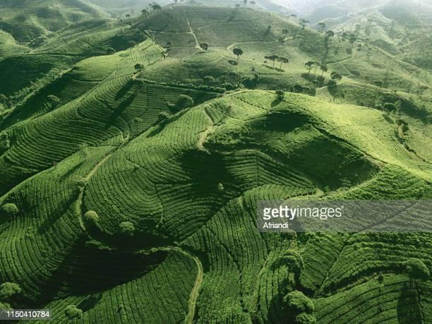 the tea plantations at pangalengan, indonesia - bandung stock pictures, royalty-free photos & images