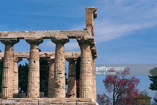 The Temple of Athena also known as Temple of Ceres Paestum Campania Italy MagnoGrecian civilisation 6th century BC
