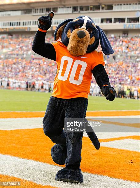 The Tennessee Volunteers mascot Smokey cheers a touchdown against the Northwestern Wildcats during the Outback Bowl at Raymond James Stadium on...