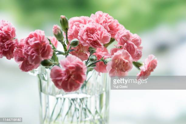 the terrace of the cottage, pink carnation flowers dedicated to mother's day against the nature background - carnation flower stock pictures, royalty-free photos & images