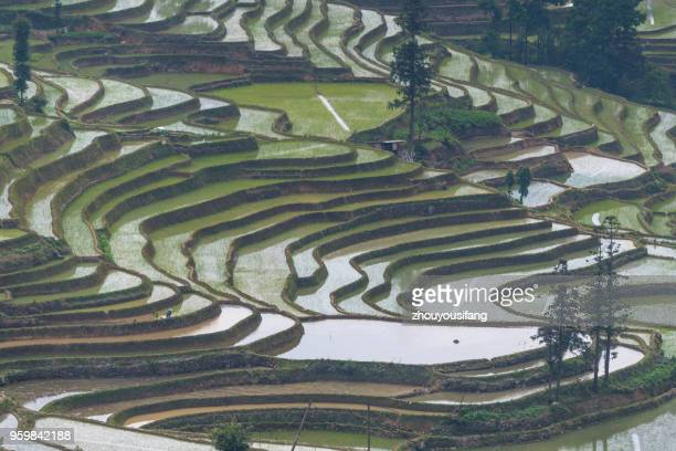 the terraced fields at spring - yuanyang stock pictures, royalty-free photos & images