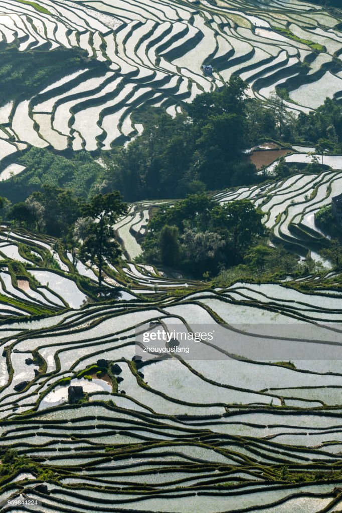 The terraced fields at spring time : Stockfoto
