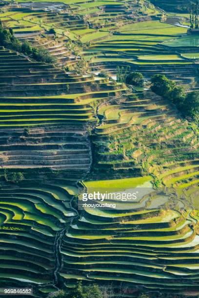 the terraced fields at spring time - rice terrace stockfoto's en -beelden